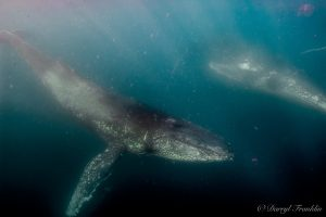 whale watching,Gold Coast